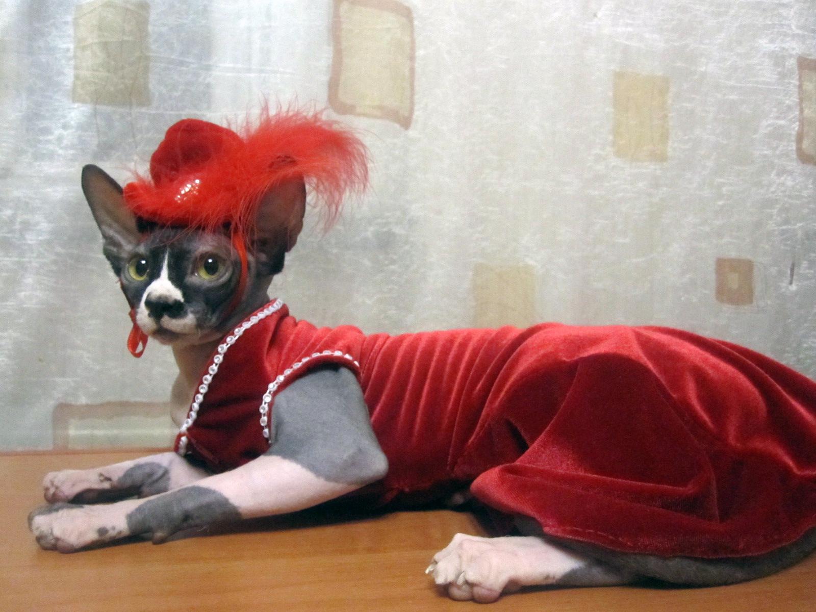 Мода на кошек фото
